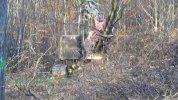 20 nov 2014 : Zone de défrichage Sud, machine à abattre les arbres par (...)