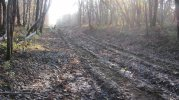 20 nov 2014 : Zone de défrichage Sud, chemin